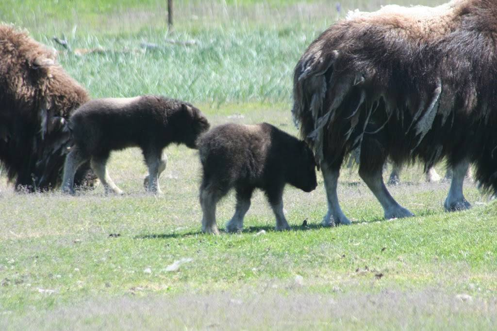 Alderwood Park - park  | Photo 7 of 10 | Address: 707 Elm St, Anchorage, AK 99501, USA | Phone: (907) 343-4355