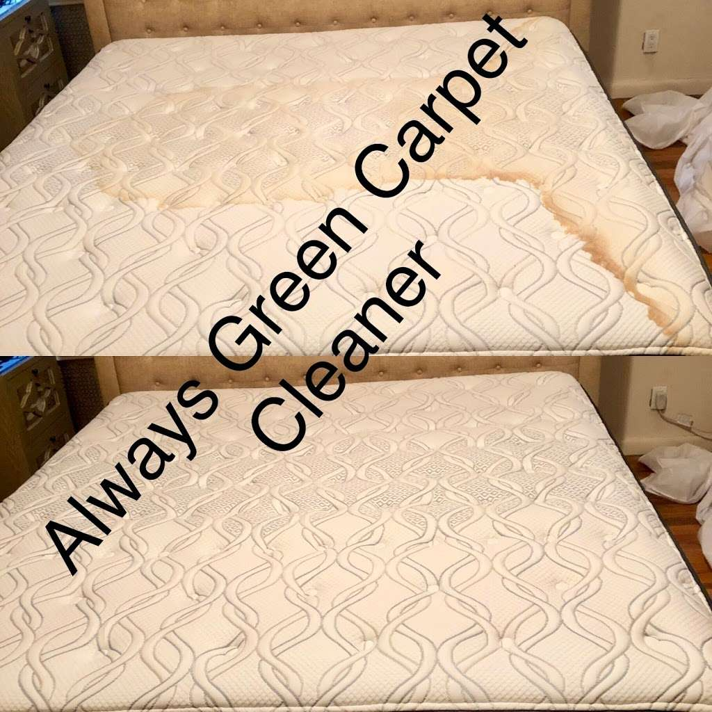 Always Green Carpet Cleaner Queens NY - 20%OFF Rug Cleaning & Up - laundry  | Photo 2 of 10 | Address: 8320 98th St, Woodhaven, NY 11421, USA | Phone: (917) 475-0141