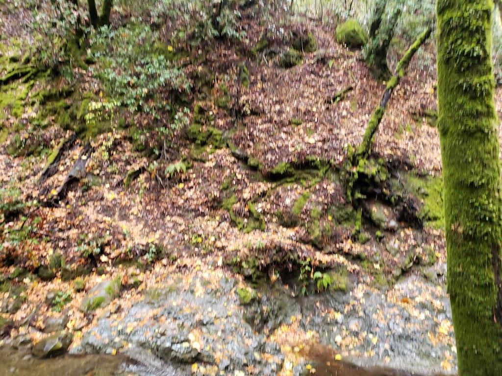 Sam Trail - park  | Photo 9 of 10 | Address: 15808 Sanborn Rd, Saratoga, CA 95070, USA