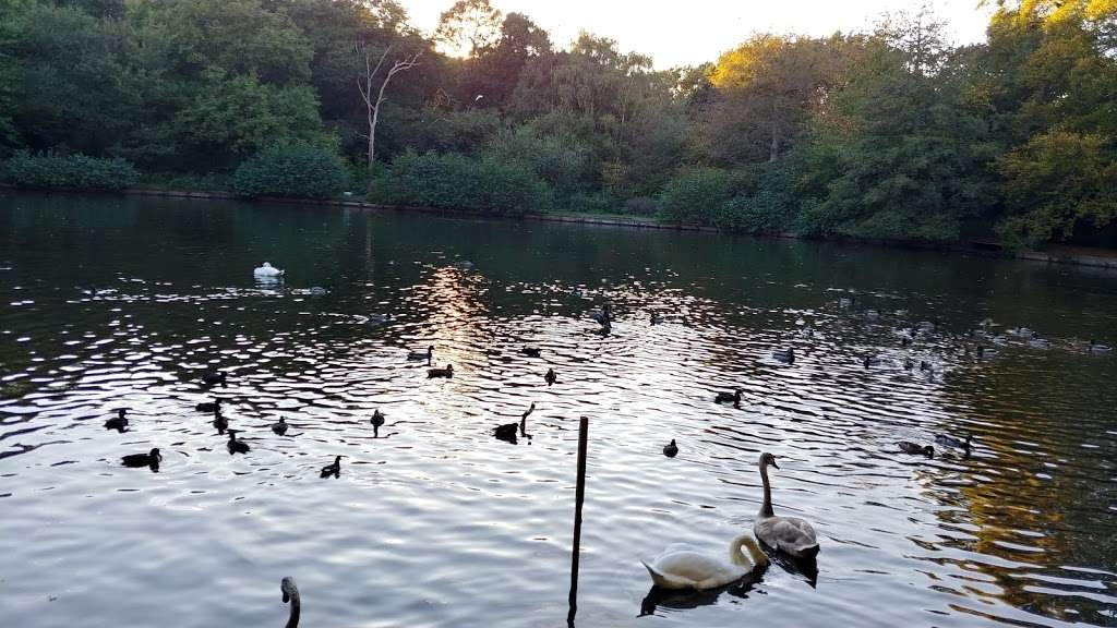 Queensmere Pond, Wimbledon Common - park  | Photo 7 of 10 | Address: Windmill Rd, Wimbledon, London SW19 5NR, UK | Phone: 020 8788 7655