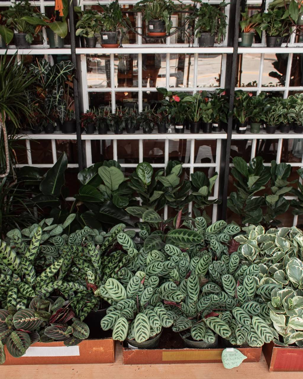 The Plant House - clothing store    Photo 7 of 8   Address: 22801 Woodward Ave, Ferndale, MI 48220, USA   Phone: (248) 270-8404