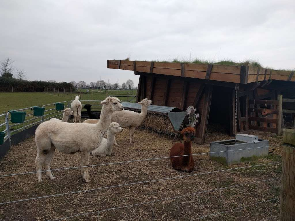 Hobbledown Adventure Farm Park and Zoo - zoo  | Photo 9 of 10 | Address: Horton Ln, Epsom KT19 8PT, UK | Phone: 01372 848990