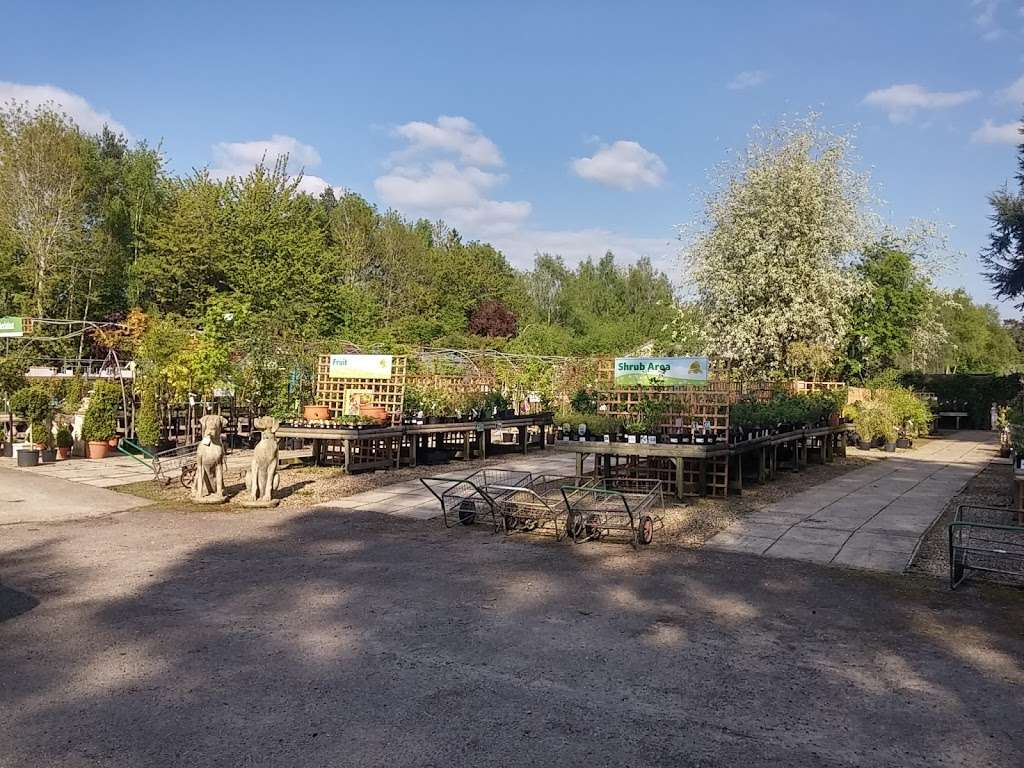 Buckland Nurseries Garden Centre - store  | Photo 10 of 10 | Address: Reigate Rd, Reigate, Betchworth RH2 9RE, UK | Phone: 01737 242990