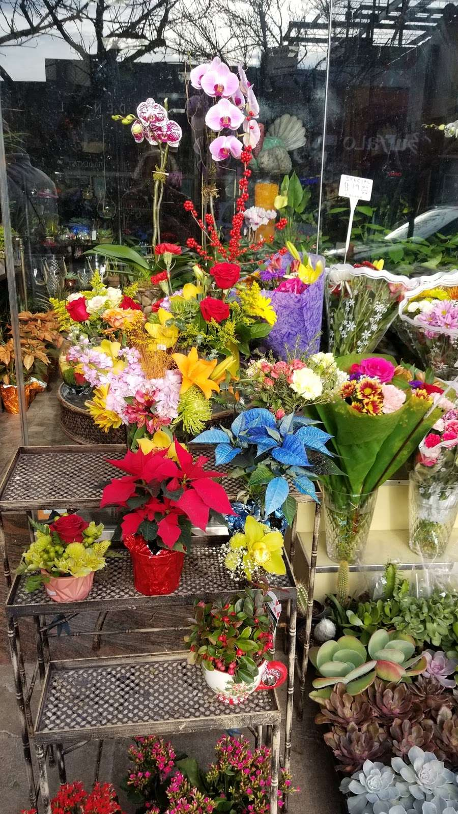 Ditmars Flower - florist  | Photo 5 of 10 | Address: 2911 Ditmars Blvd, Queens, NY 11105, USA | Phone: (718) 726-4453