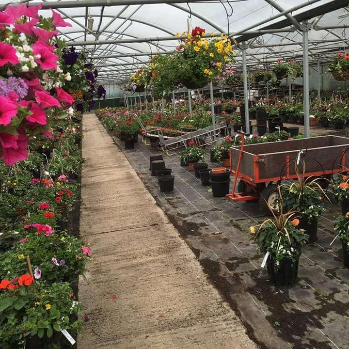 Matthews Plants - store  | Photo 6 of 10 | Address: Hadley Nursery, Tylers Rd, Roydon, Harlow CM19 5LJ, UK | Phone: 01279 793539