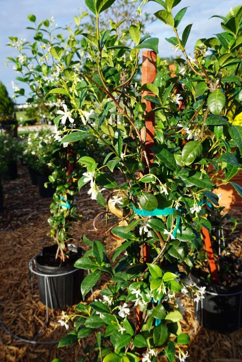 Select Growers - store    Photo 6 of 10   Address: 4391 FL-11, De Leon Springs, FL 32130, USA   Phone: (386) 734-8883