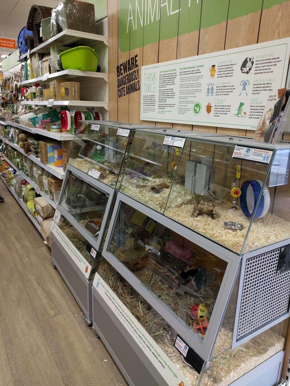 Pets Corner Enfield - pet store  | Photo 8 of 10 | Address: Phoenix Rose Homes & Gardens Cattlegate Road, Crews Hill, Enfield EN2 9DP, UK | Phone: 020 8366 4161