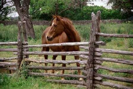 Temecula Valley Horse Property - real estate agency  | Photo 3 of 10 | Address: 40750 Carmelita Cir, Temecula, CA 92591, USA | Phone: (951) 966-1389