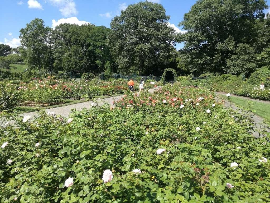 Rockefeller Rose Garden - park  | Photo 7 of 10 | Address: Bronx River Pkwy, Bronx, NY 10467, USA | Phone: (718) 817-8700
