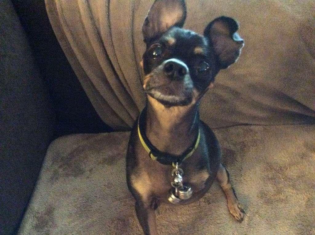 Tender Paws Animal Hospital - pharmacy  | Photo 5 of 10 | Address: 4235 N Frazier St, Conroe, TX 77303, USA | Phone: (936) 856-3339