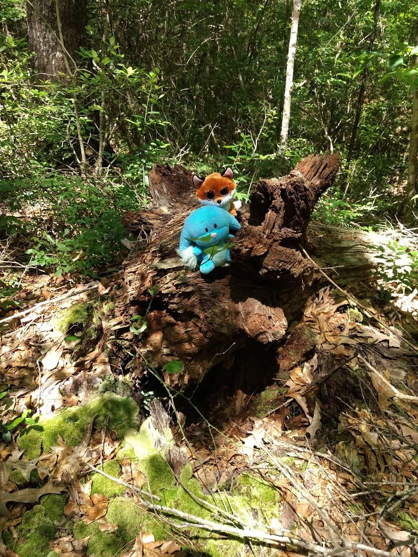 Lone Star Trailhead #4 - park  | Photo 9 of 9 | Address: FM 149, Montgomery, TX 77356, USA | Phone: (936) 344-6205