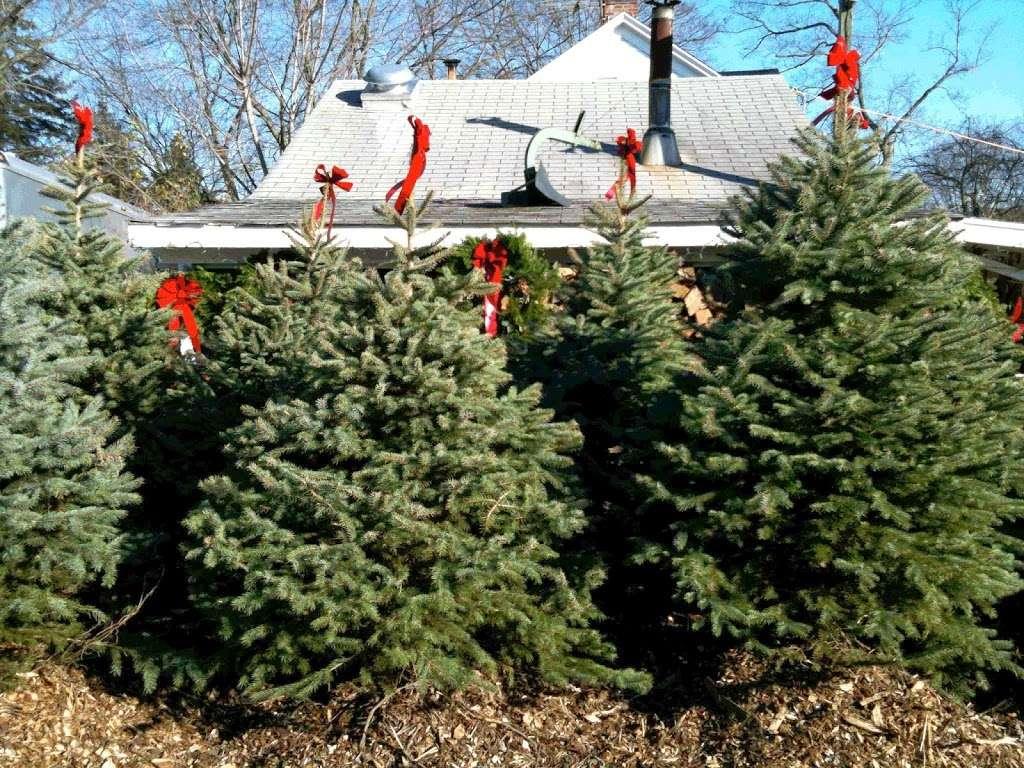 Country Gentleman Christmas Trees & Firewood - store    Photo 4 of 5   Address: 115 Washington Valley Rd, Warren, NJ 07059, USA   Phone: (732) 356-1178