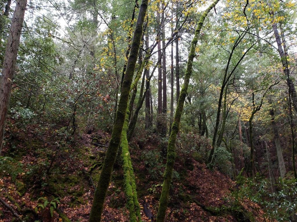 Sam Trail - park  | Photo 5 of 10 | Address: 15808 Sanborn Rd, Saratoga, CA 95070, USA