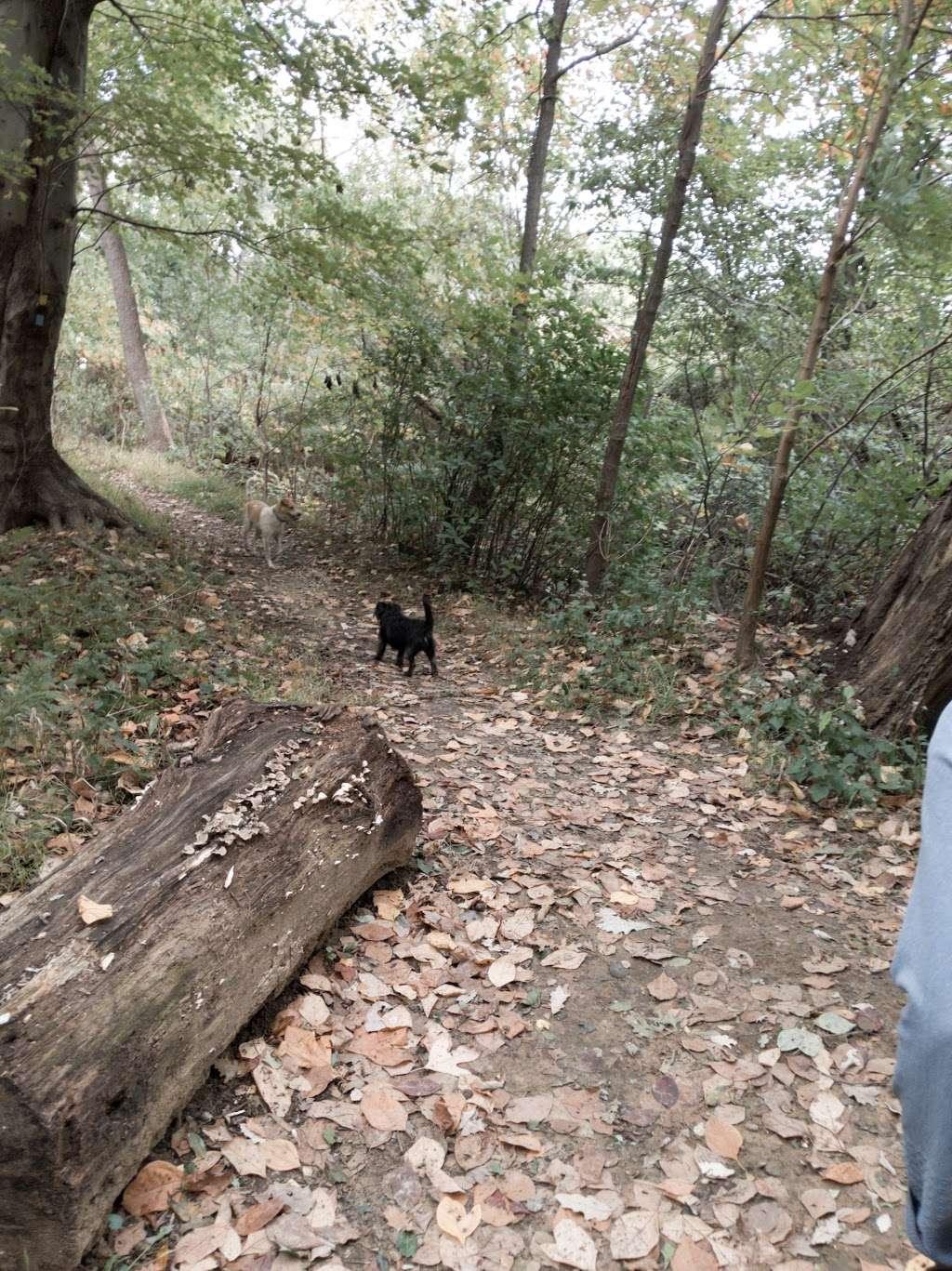 Losen Slote Creek Park - park  | Photo 6 of 10 | Address: Mehrhof Rd, Little Ferry, NJ 07643, USA