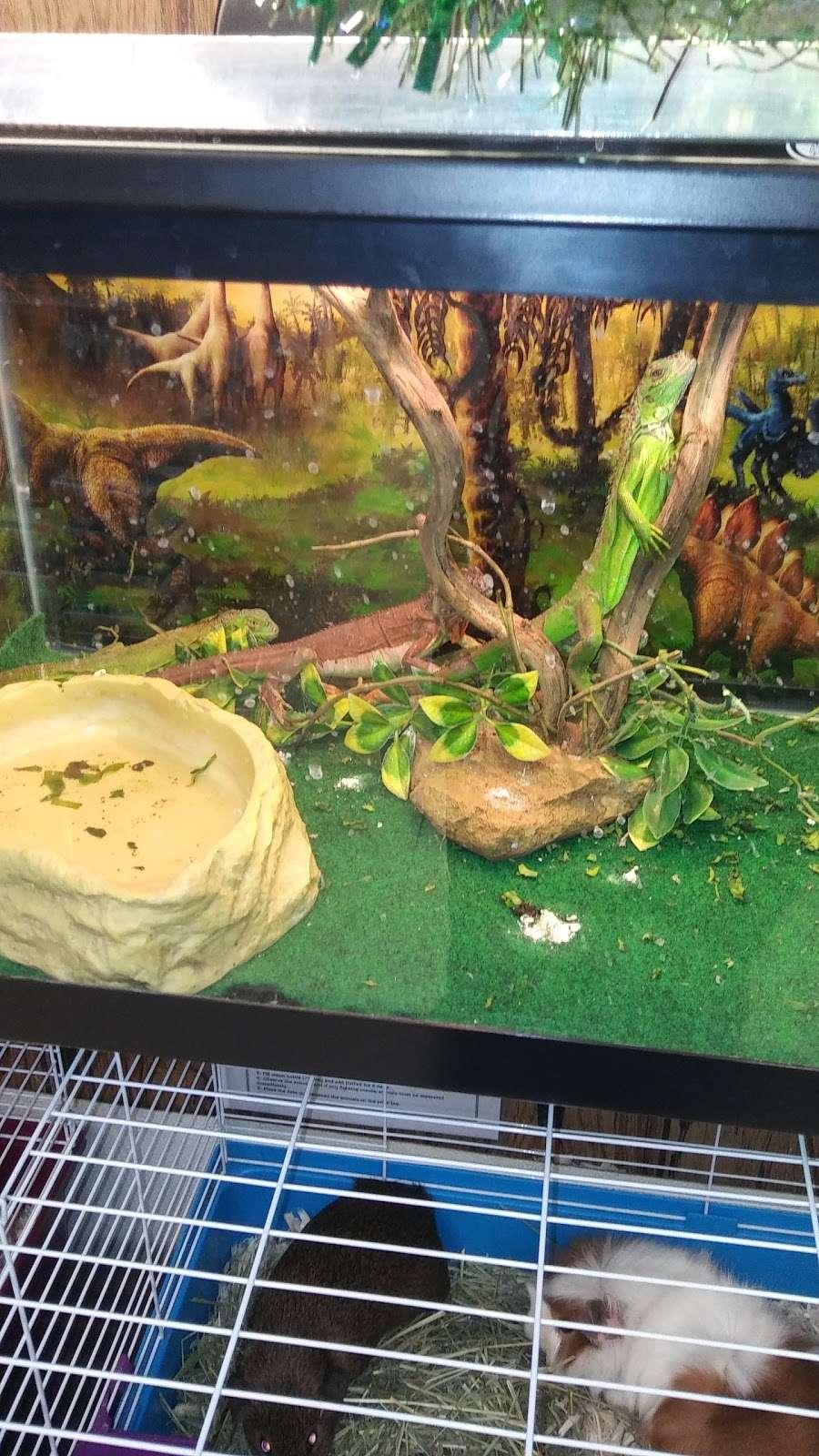 Petland Discounts - Jersey City - pet store  | Photo 7 of 10 | Address: Rt 440 & Kellogg Street, Stadium Plaza, Jersey City, NJ 07305, USA | Phone: (201) 435-9217