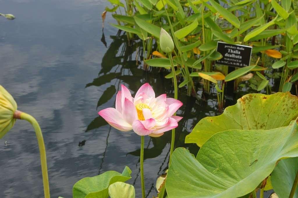 The Jane Watson Irwin Perennial Garden - park  | Photo 9 of 10 | Address: 2900 Southern Blvd, The Bronx, NY 10458, USA | Phone: (718) 817-8700