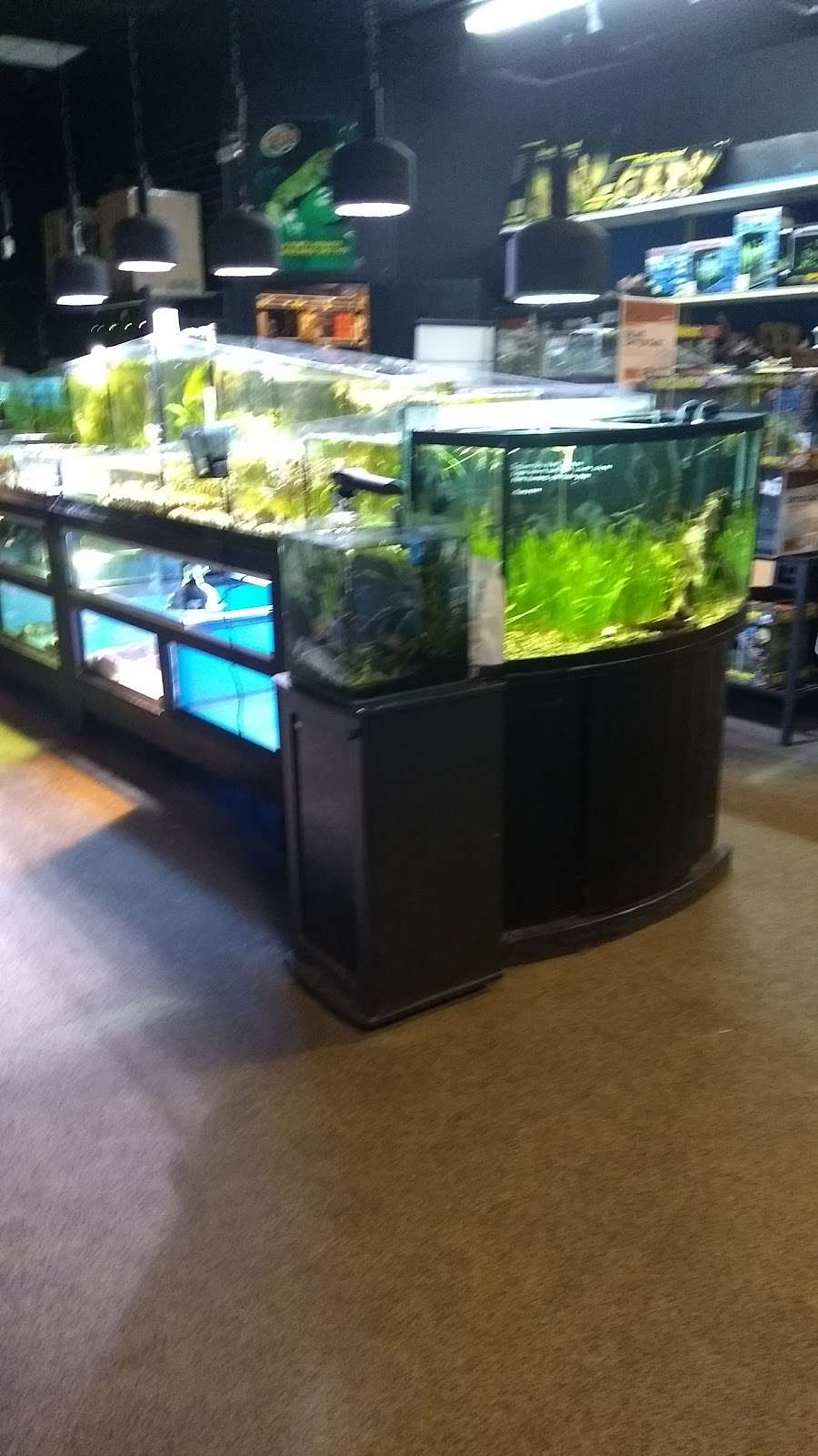 Captain Nemo S Aquarium Superstore 2876 Dekalb Pike Norristown Pa 19401 Usa