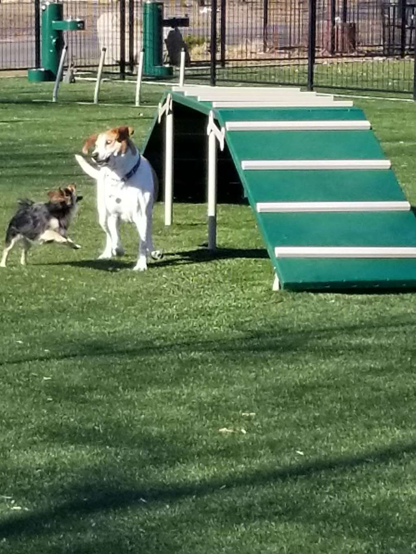 Welcome Home Doggy Daycare - park  | Photo 3 of 10 | Address: 16 Parkview Terrace, Bayonne, NJ 07002, USA | Phone: (201) 890-3347