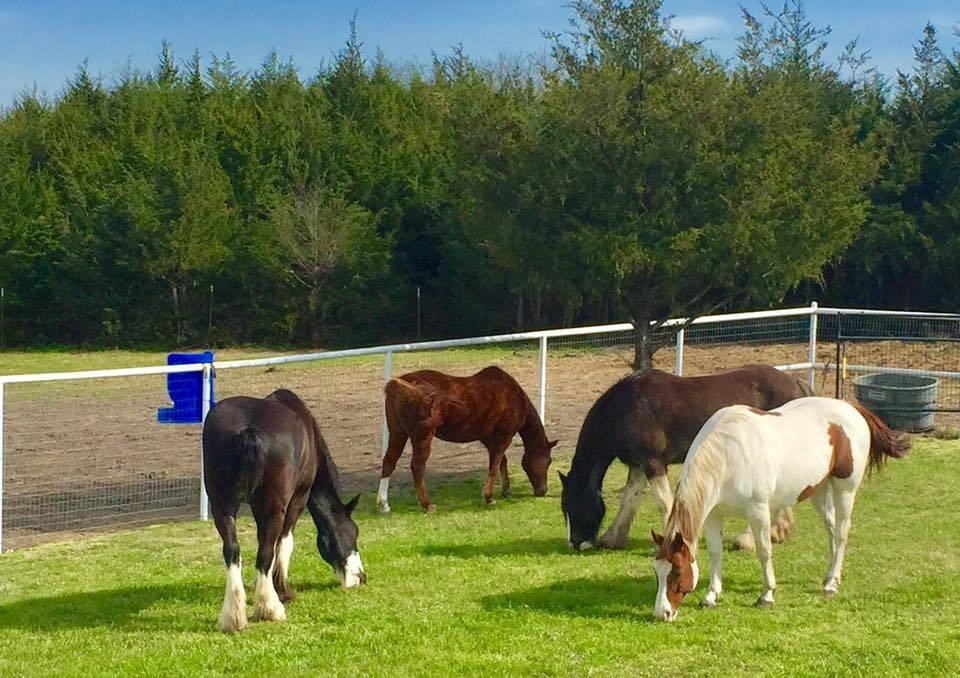 Lakeland RV Ranch - rv park  | Photo 3 of 10 | Address: 4609 Co Rd 551, Farmersville, TX 75442, USA | Phone: (682) 551-5211