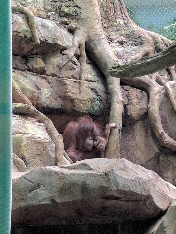 Hubbard Orangutan Forest - zoo    Photo 6 of 9   Address: 2119170000, Omaha, NE 68108, USA   Phone: (402) 733-8401