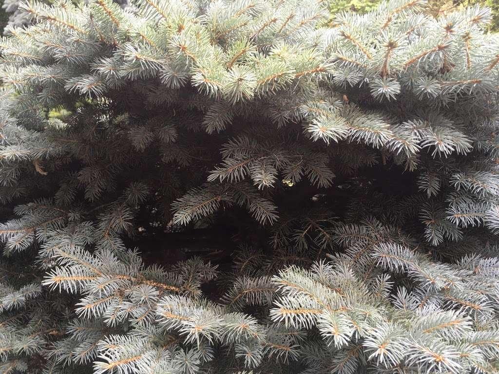 Fragrance Garden Alice Recknagel Ireys - park  | Photo 6 of 10 | Address: 998 Mary Pinkett Avenue, Brooklyn, NY 11225, USA | Phone: (718) 623-7200