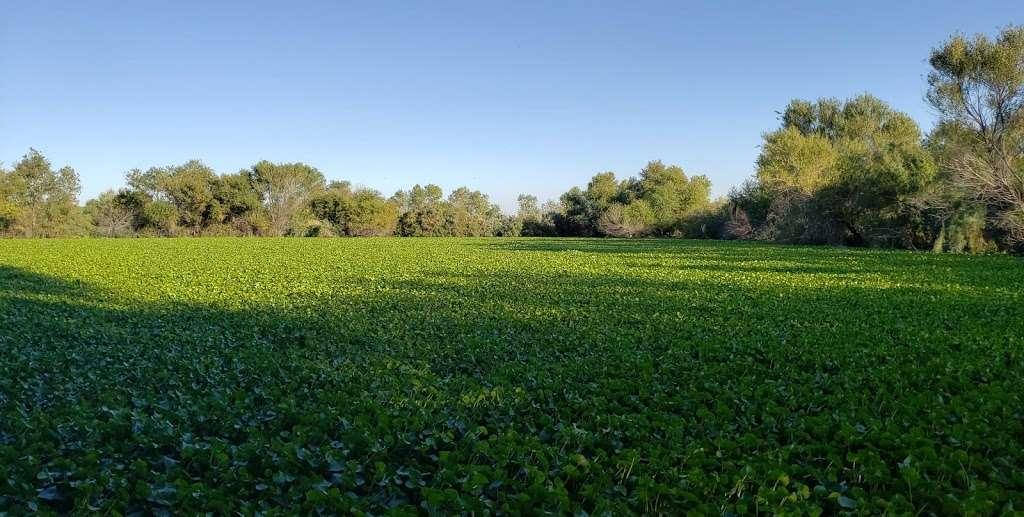 Tres Rios Wetlands Hayfield Site - park  | Photo 5 of 10 | Address: 8209 S 70th Ln, Laveen Village, AZ 85339, USA