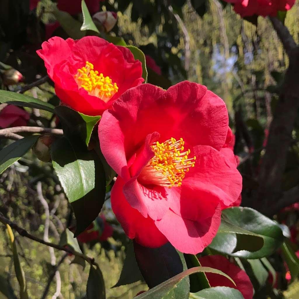 Shakespeare Garden - park  | Photo 7 of 8 | Address: 990 Washington Ave, Brooklyn, NY 11225, USA | Phone: (718) 623-7200