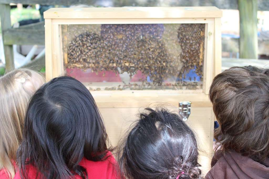 Village Montessori School - school  | Photo 3 of 10 | Address: 33874 Snickersville Turnpike, Bluemont, VA 20135, USA | Phone: (540) 454-7514