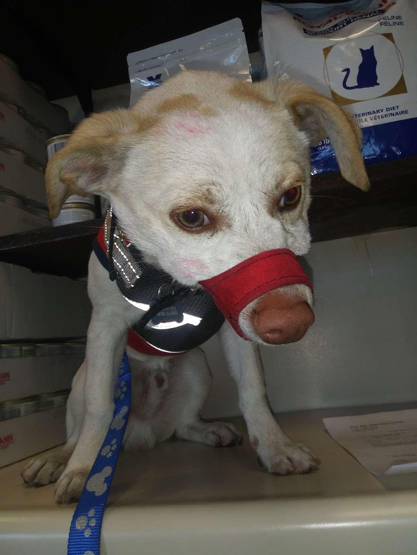 Five Star Veterinary Center - veterinary care  | Photo 3 of 8 | Address: 13725 Foothill Blvd, Sylmar, CA 91342, USA | Phone: (818) 362-6599