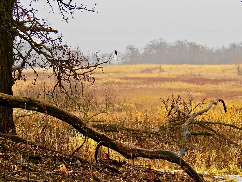 Bluff Spring Fen - park    Photo 10 of 10   Address: Spring Grove Ave, Elgin, IL 60120, USA   Phone: (847) 464-4426
