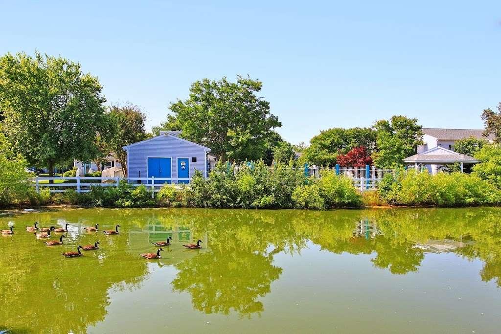 Island Club Apartments - real estate agency  | Photo 6 of 8 | Address: 1500 Sharen Dr, Salisbury, MD 21804, USA | Phone: (410) 860-0095