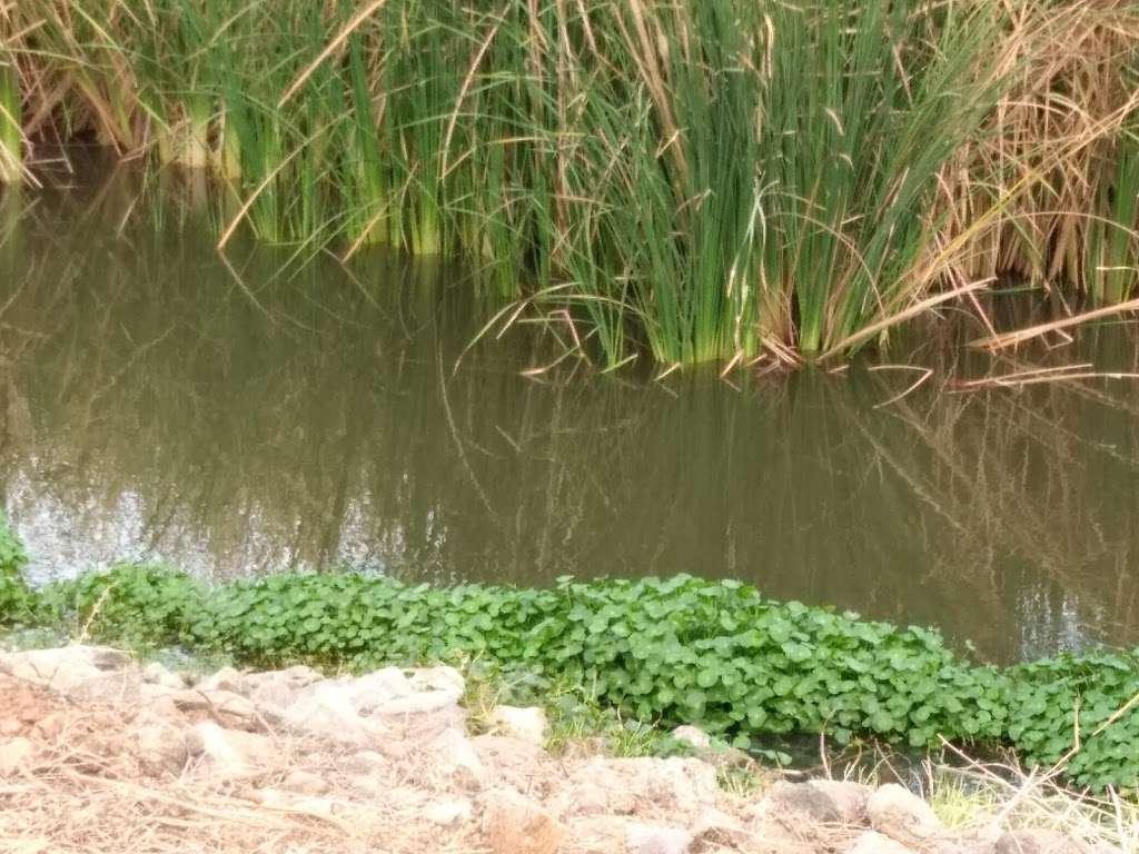 Tres Rios Wetlands Hayfield Site - park  | Photo 8 of 10 | Address: 8209 S 70th Ln, Laveen Village, AZ 85339, USA