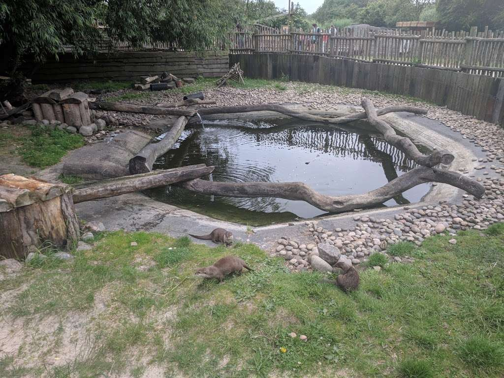 Hobbledown Adventure Farm Park and Zoo - zoo  | Photo 6 of 10 | Address: Horton Ln, Epsom KT19 8PT, UK | Phone: 01372 848990
