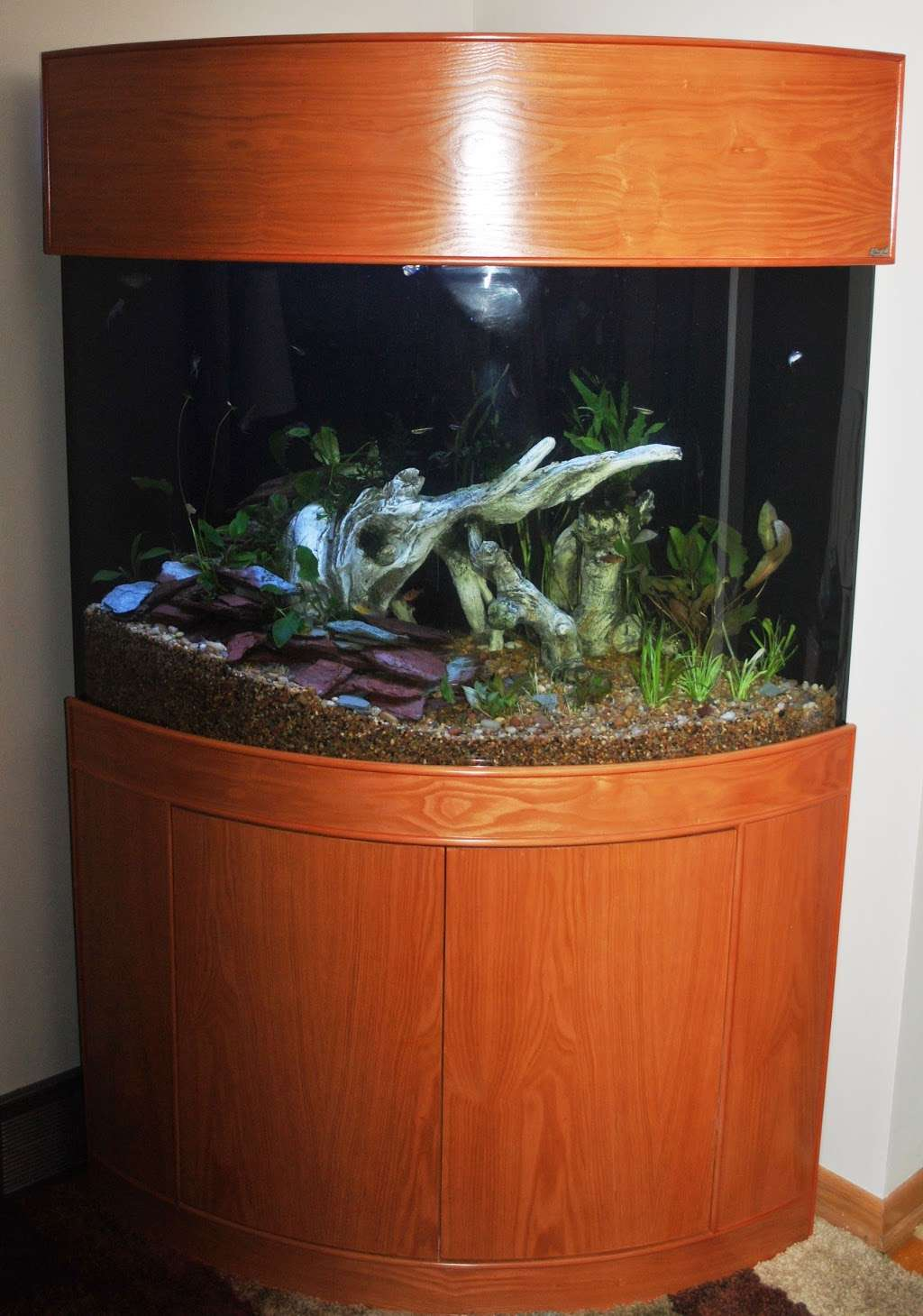 Aqua Vim - aquarium  | Photo 2 of 5 | Address: 5408 46th St, Flushing, NY 11378, USA | Phone: (718) 433-2698