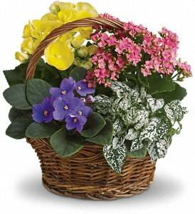 Flowers Unlimited - florist  | Photo 5 of 8 | Address: 5532 66th St N, St. Petersburg, FL 33709, USA | Phone: (727) 384-5900