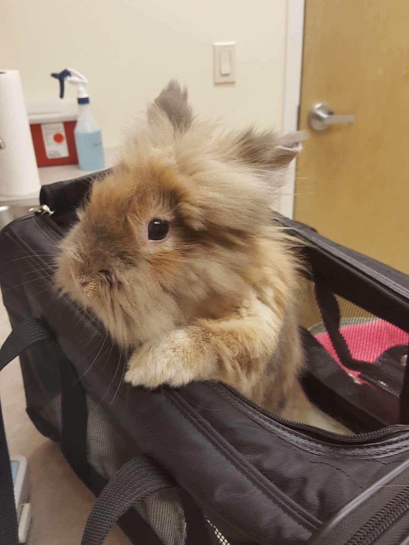 Catnip and Carrots - veterinary care  | Photo 10 of 10 | Address: 2056 Jericho Turnpike, New Hyde Park, NY 11040, USA | Phone: (516) 877-7080