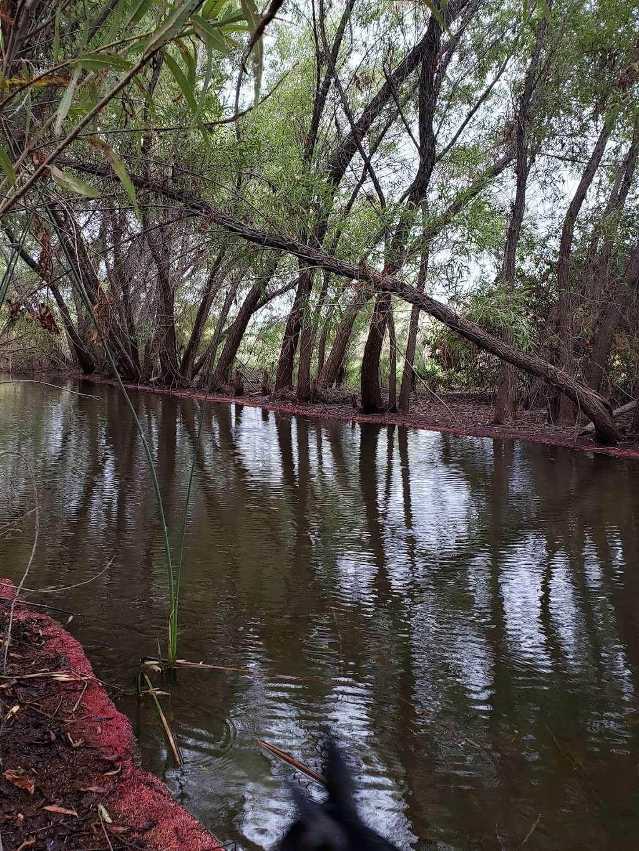 Tres Rios Wetlands Hayfield Site - park  | Photo 3 of 10 | Address: 8209 S 70th Ln, Laveen Village, AZ 85339, USA