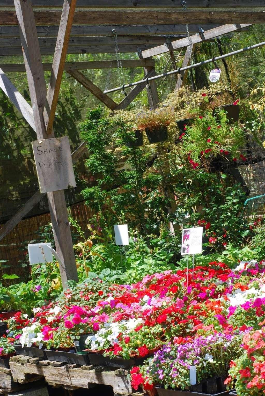 Plant Works - florist  | Photo 6 of 10 | Address: 7945 Hwy 9, Ben Lomond, CA 95005, USA | Phone: (831) 336-2212