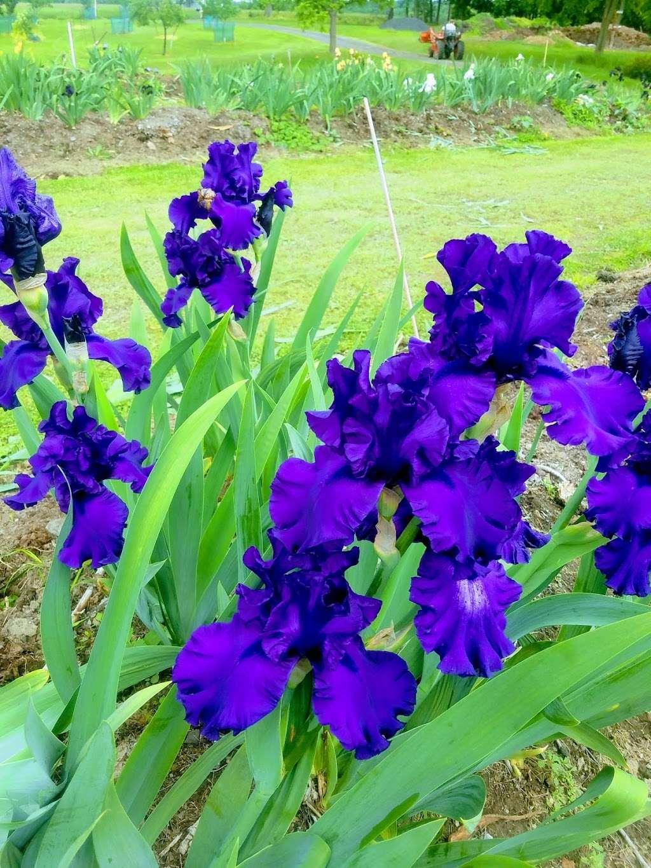 Lambertville Iris Patch - store    Photo 9 of 10   Address: 641 Brunswick Pike, Lambertville, NJ 08530, USA   Phone: (609) 397-3560