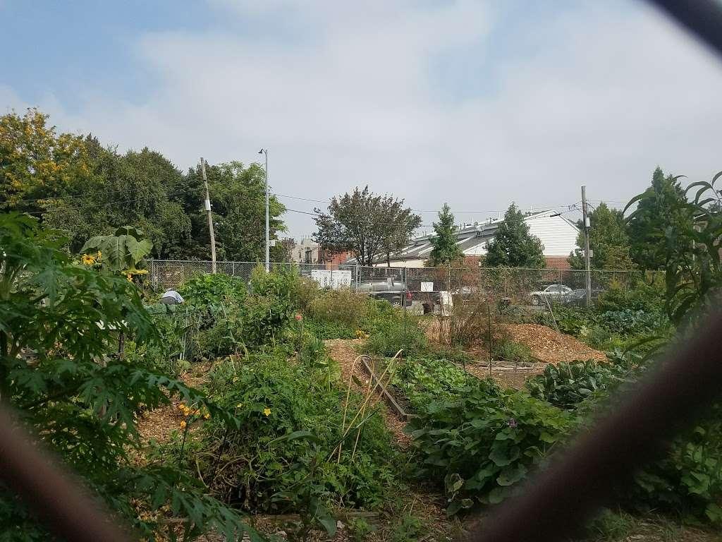Phoenix Community Garden - park  | Photo 2 of 10 | Address: 2037 Fulton St, Brooklyn, NY 11233, USA | Phone: (212) 788-7900