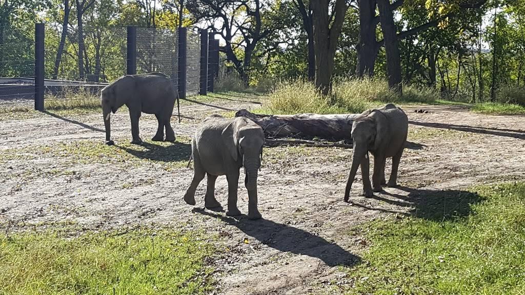 Elephant Amphitheater - zoo    Photo 5 of 10   Address: 3901-, 3999 S River Dr, Omaha, NE 68108, USA   Phone: (402) 733-8400