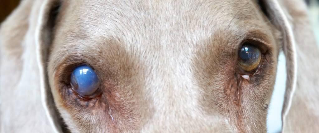 LSU School of Veterinary Medicine - veterinary care  | Photo 6 of 9 | Address: Skip Bertman Dr, Baton Rouge, LA 70803, USA | Phone: (225) 578-9900