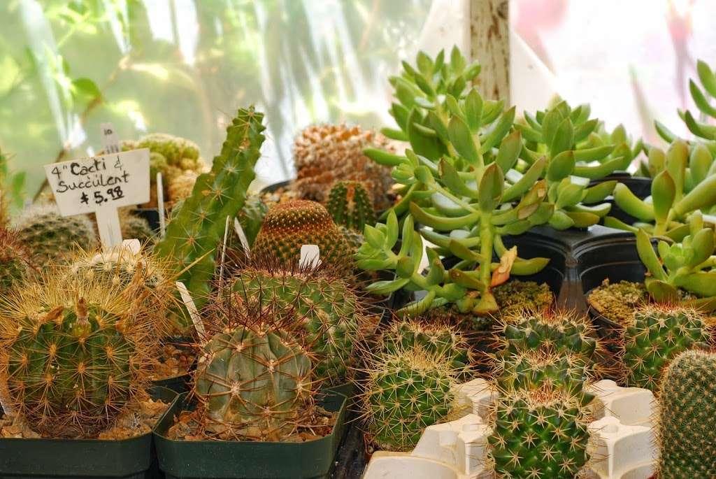 Plant Works - florist  | Photo 3 of 10 | Address: 7945 Hwy 9, Ben Lomond, CA 95005, USA | Phone: (831) 336-2212