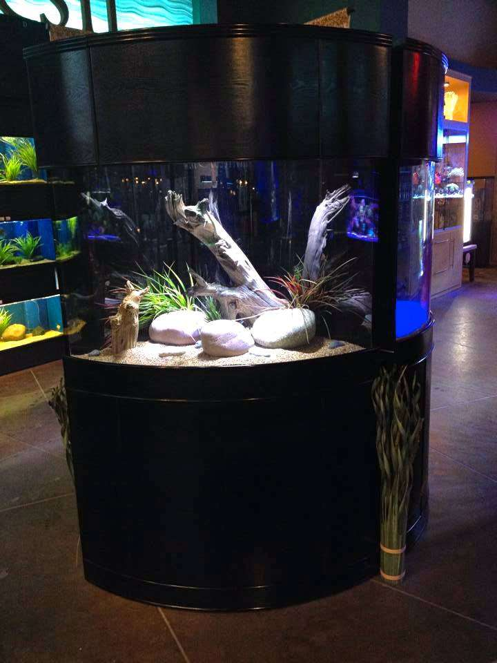 Aqua Vim - aquarium  | Photo 4 of 5 | Address: 5408 46th St, Flushing, NY 11378, USA | Phone: (718) 433-2698