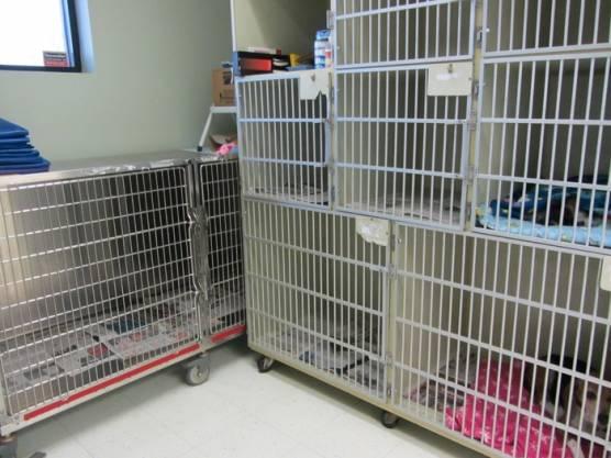 Skaer Veterinary Clinic - veterinary care  | Photo 1 of 10 | Address: 404 S Edgemoor St #100, Wichita, KS 67218, USA | Phone: (316) 683-4641