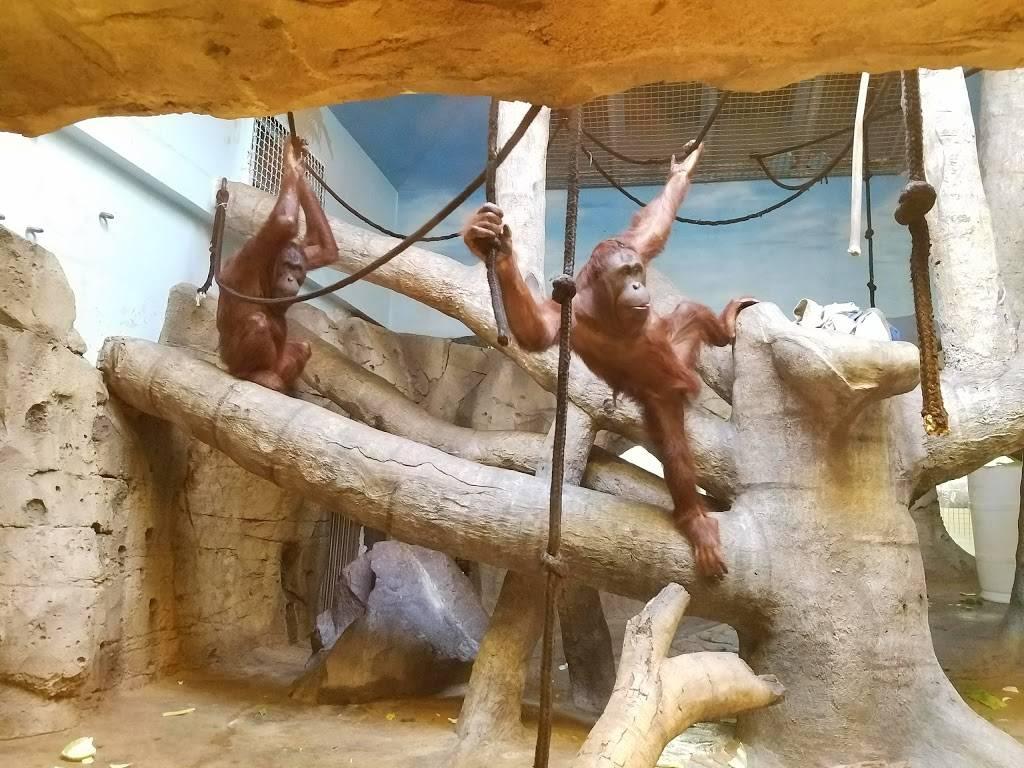 Hubbard Orangutan Forest - zoo    Photo 5 of 9   Address: 2119170000, Omaha, NE 68108, USA   Phone: (402) 733-8401