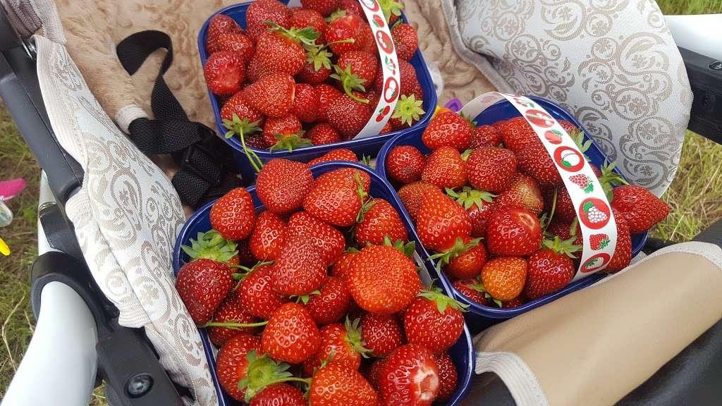 Parkside Farm Pick Your Own - store  | Photo 7 of 10 | Address: Parkside Farm, Hadley Rd, Enfield EN2 8LA, UK | Phone: 020 8367 2035