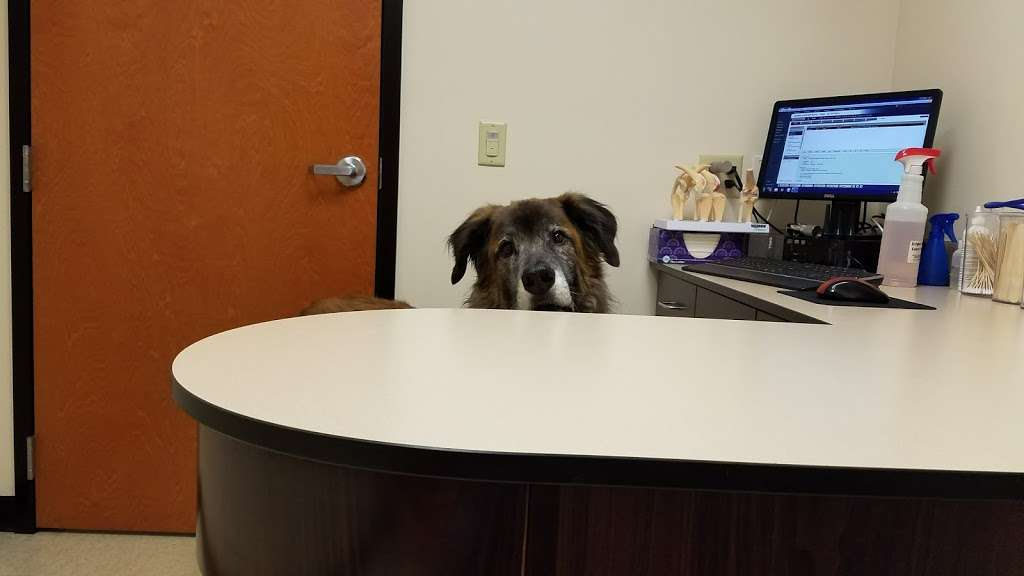 Rush Veterinary Center - veterinary care  | Photo 1 of 10 | Address: 9 Lafayette Ave, Tamaqua, PA 18252, USA | Phone: (570) 668-1222