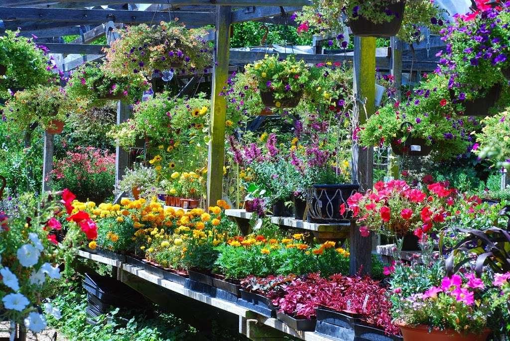 Plant Works - florist  | Photo 10 of 10 | Address: 7945 Hwy 9, Ben Lomond, CA 95005, USA | Phone: (831) 336-2212