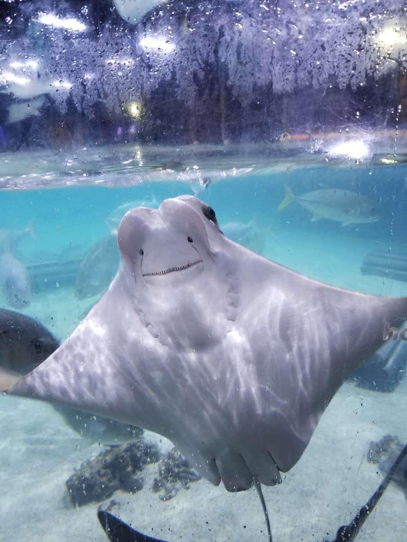 San Antonio Aquarium - aquarium  | Photo 2 of 10 | Address: 6320 Bandera Rd, Leon Valley, TX 78238, USA | Phone: (210) 310-3210